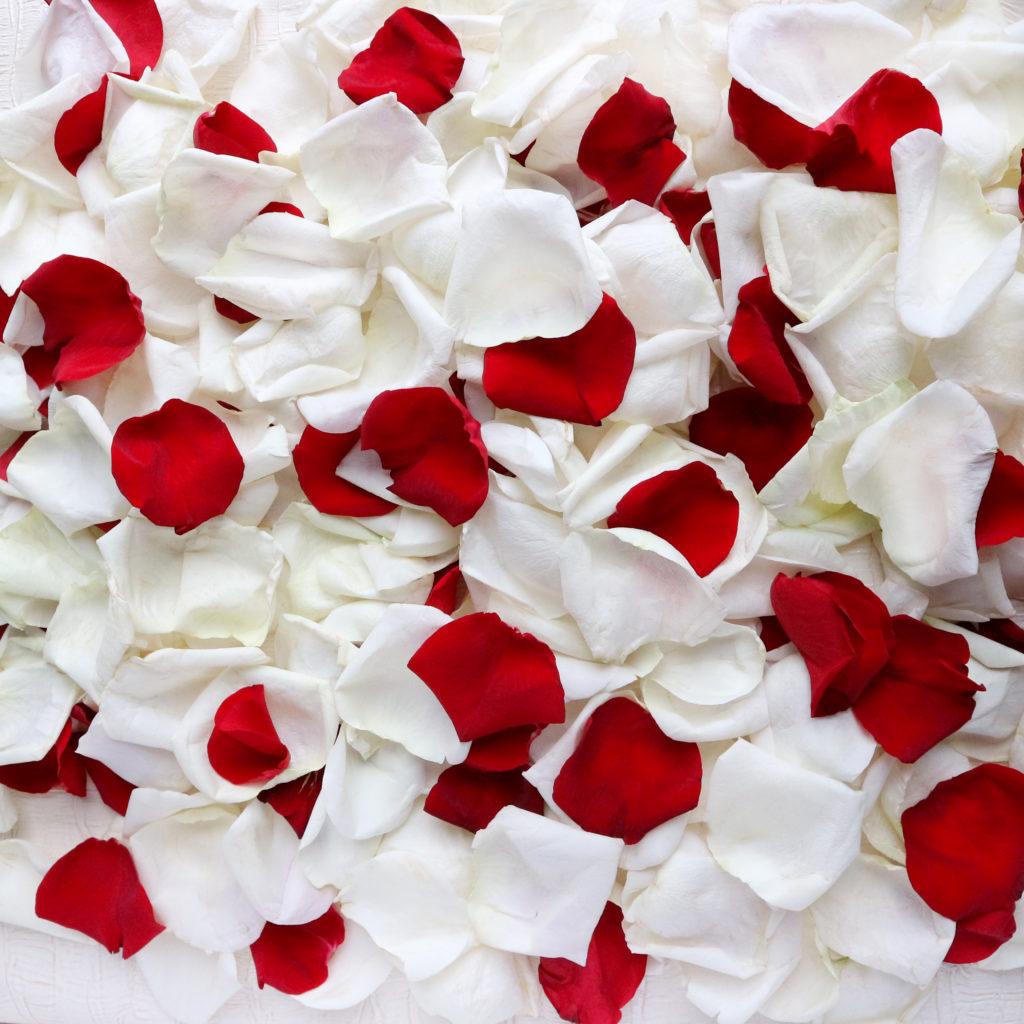 Открытки красные с белым