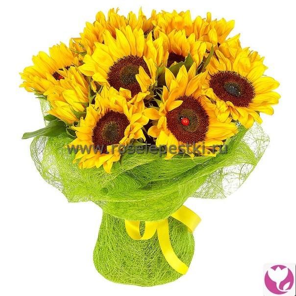 Заказ цветов подсолнухи с доставкой в москве родогипоксис купить цветы через интернет магазин