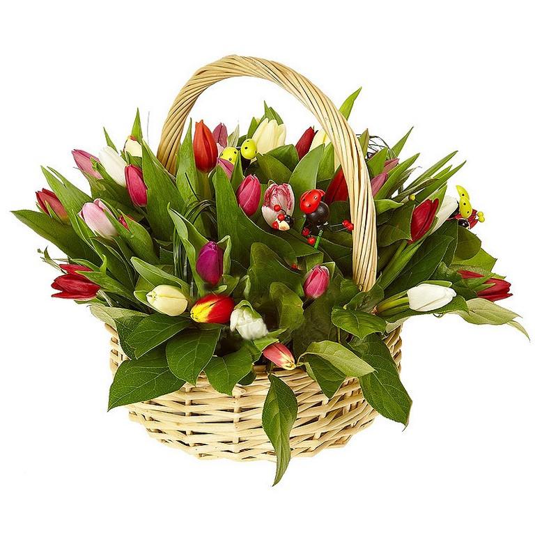 51 тюльпан в корзинке
