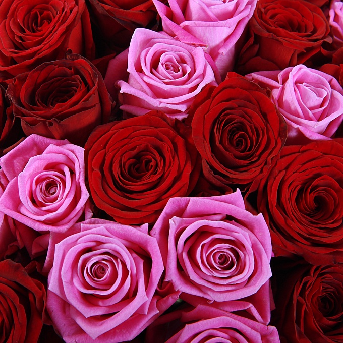 Розы розовые картинки охапка, нормалек