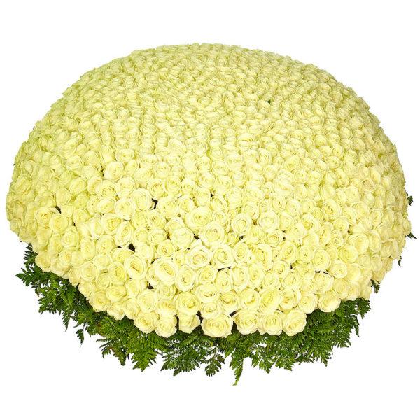 501 белая роза
