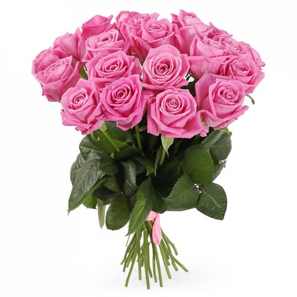 21 розовая роза