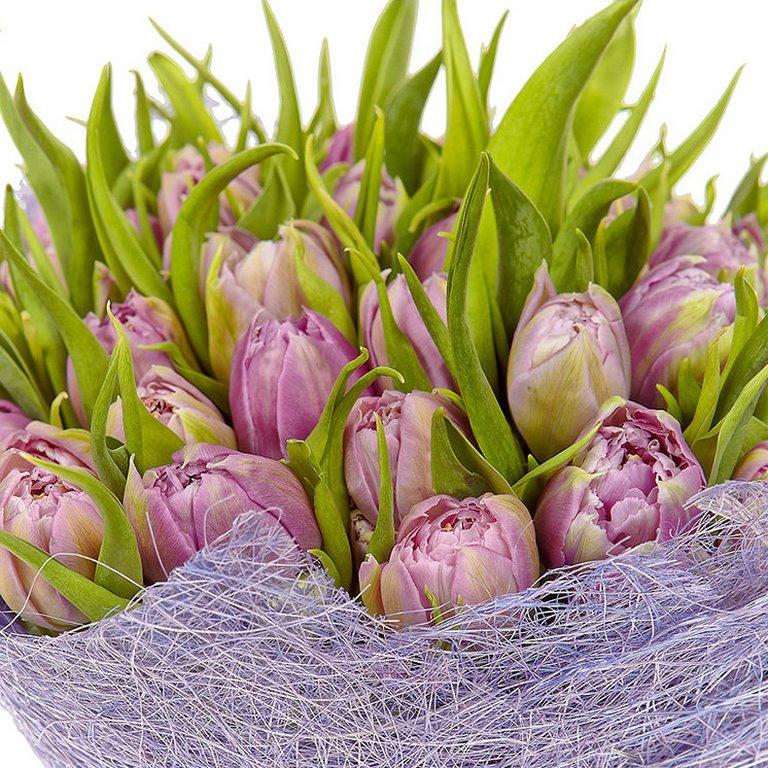 51 лавандовый тюльпан