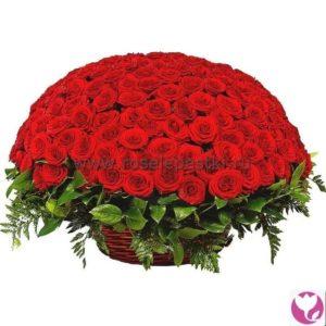 201 красная роза
