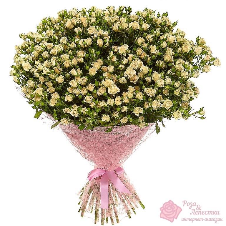101 кремовая кустовая роза