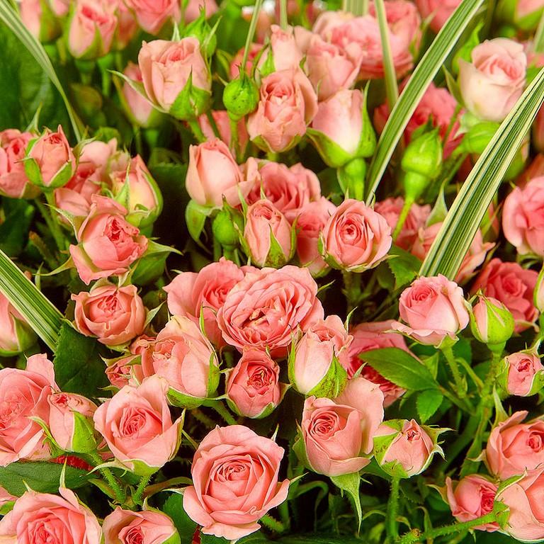 51 кустовая роза