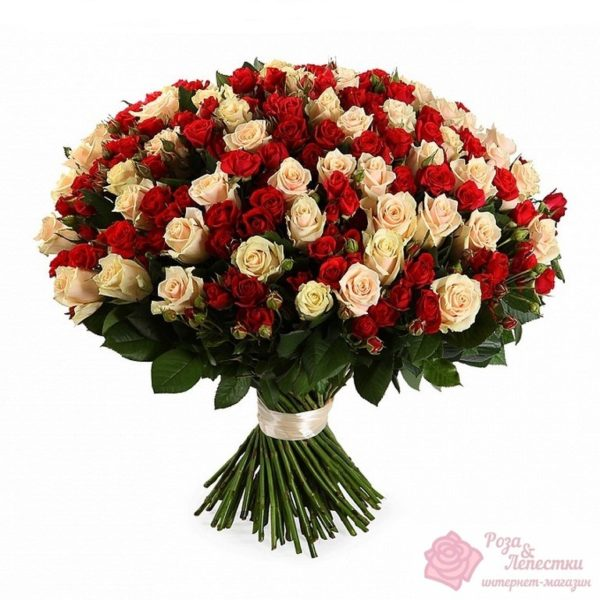 71 кремово-красная роза