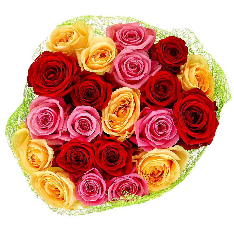 21 розовая, кремовая и красная роза