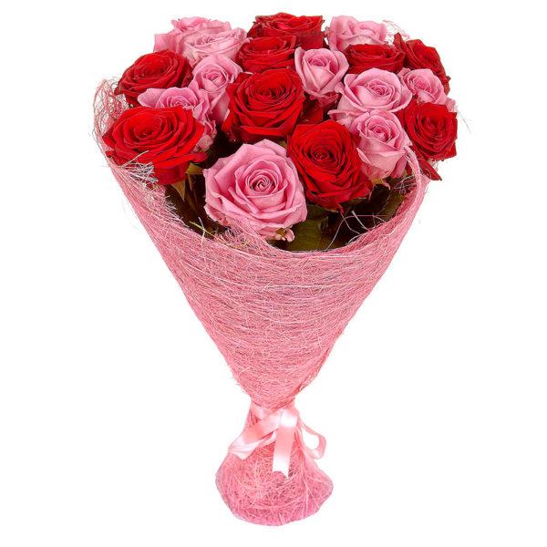 21 красно-розовая роза