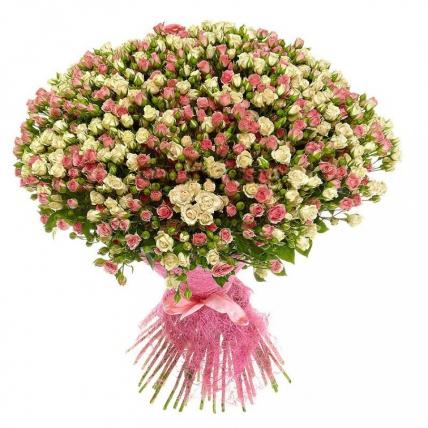 101 бело-розовая кустовая роза