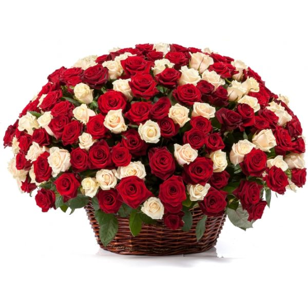 251 красно-белая роза в корзинке