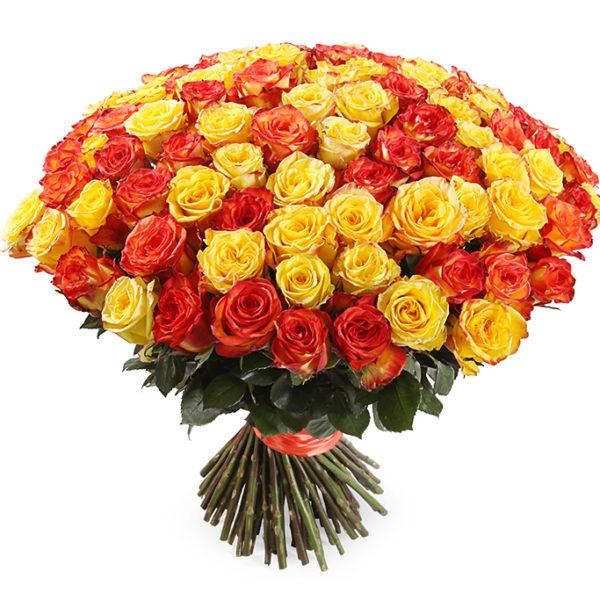 101 желто-рыжая роза