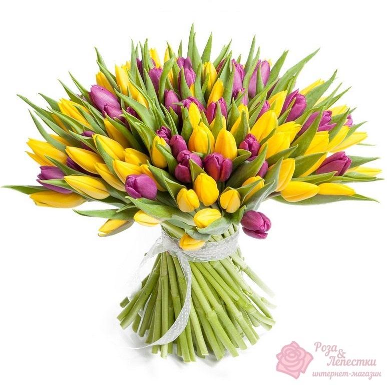 101 желто-фиолетовый тюльпан