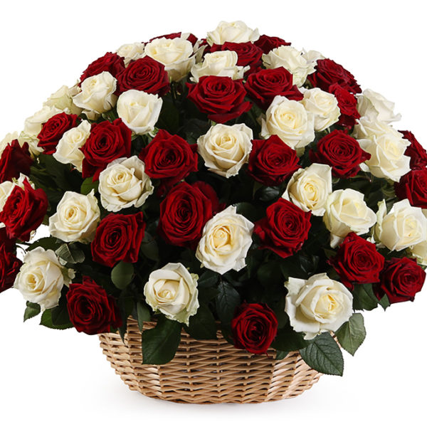 101 красно-белая роза в корзинке
