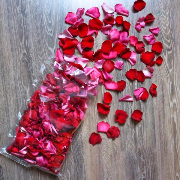 Красно-розовые лепестки роз