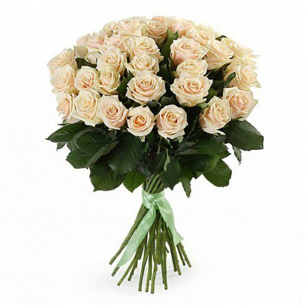 31 кремовая роза