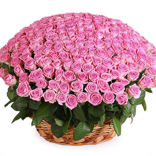 251 розовая роза в корзинке
