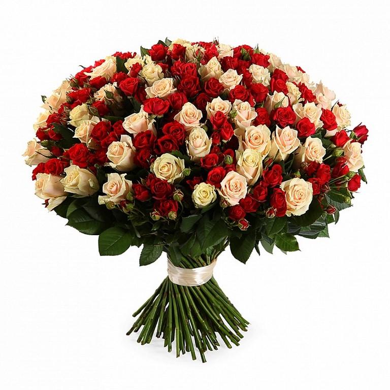 101 кремово-красная кустовая роза