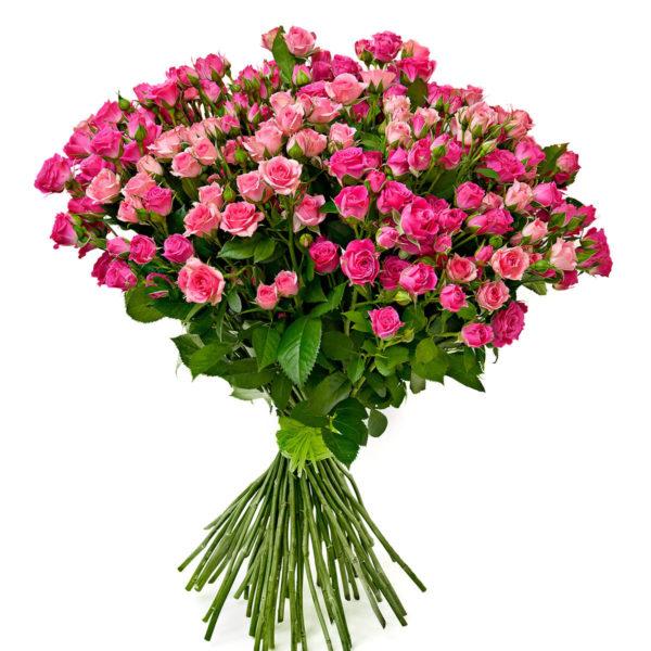 31 розовая кустовая роза