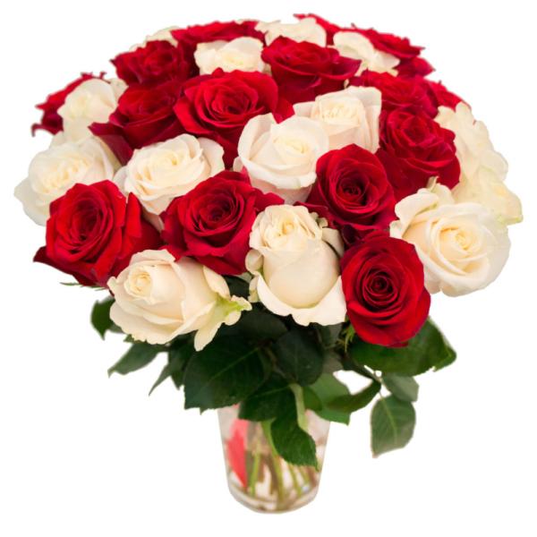 31 красно-белая роза