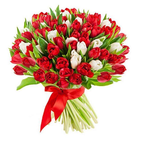 101 красно-белый тюльпан