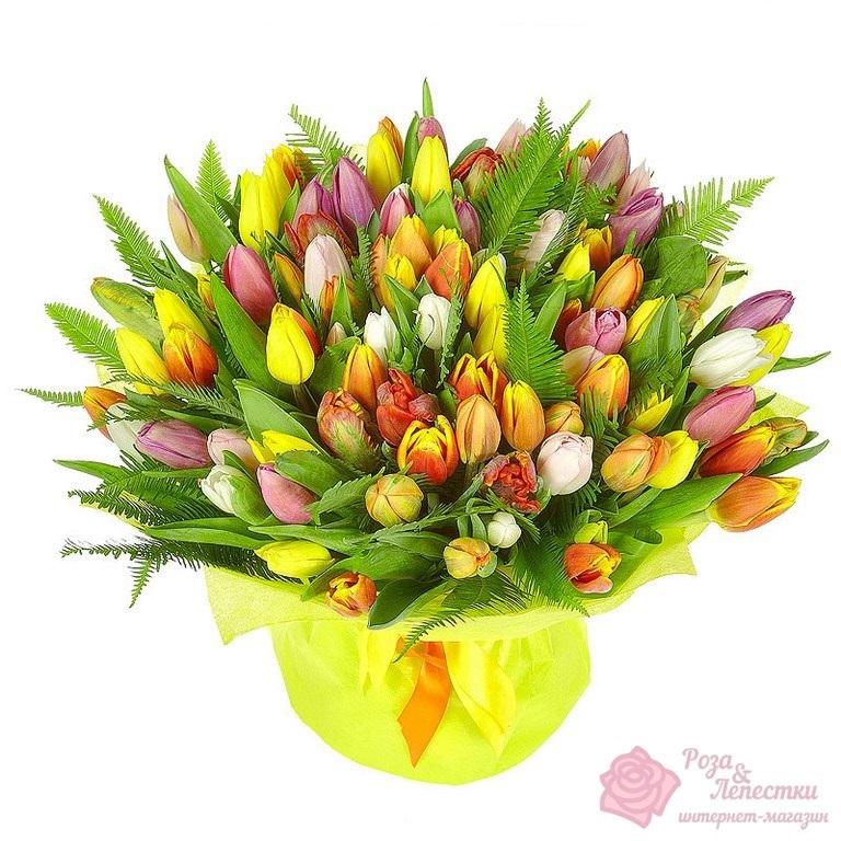 51 разноцветный тюльпан