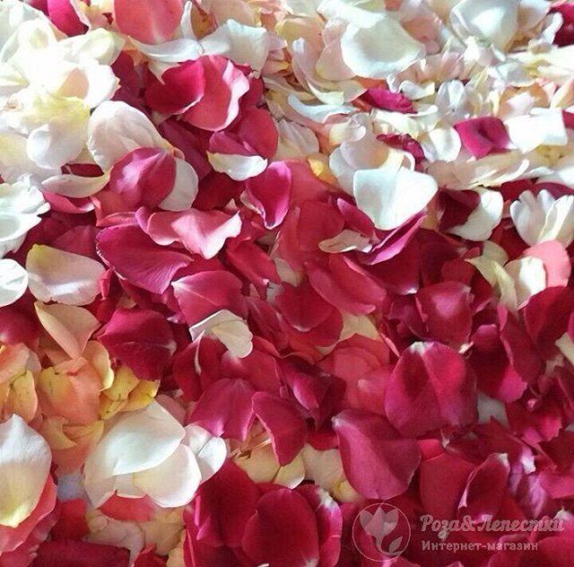 Интернет-магазин «Розы и Лепестки» предлагает выгодные цены на цветы и Лепестки роз️10л.лепестков - 1 100 руб.20л.лепестков - 1 800 руб.Контакты: 8(499)755-85-06 8(905)783-35-35(WhatsApp,Viber)www.roselepestki.ru#москва#цветымосква#купитьцветымосква#доставкацветовмосква#заказатьцветымосква#букетымосква#купитьбукетмосква#доставкабукетовмосква#заказатьбукетмосква#доставкарозмосква#заказатьрозымосква#цветыдешевомосква#мск#лепесткирозмосква#подарокмосква#101розамосква#цветысдоставкоймосква#цветыназаказмосква#букетназаказмосква#магазинцветовмосква#цветывкоробкемосква#цум#гум#купитьлепесткирозмосква#лепесткирознасвадьбумосква#букетневестымосква#цветымск