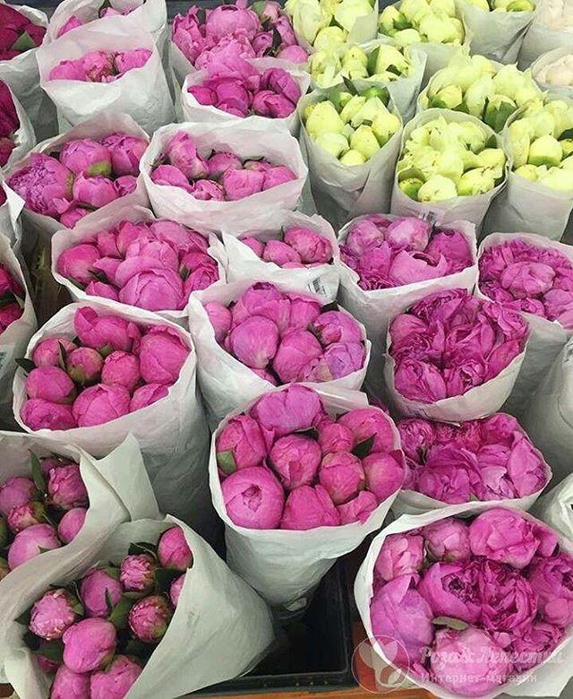 Цветы - это всегда красиво, мило и приятно. Подари эту красоту своим любимым! ️ 🚛Бесплатная доставка цветов и лепестков в Москве и МО.Контакты:️ 8(499)755-85-06 8(905)783-35-35(WhatsApp,Viber)www.roselepestki.ru#москва#цветымосква#купитьцветымосква#доставкацветовмосква#заказатьцветымосква#букетымосква#купитьбукетмосква#доставкабукетовмосква#заказатьбукетмосква#доставкарозмосква#заказатьрозымосква#цветыдешевомосква#мск#лепесткирозмосква#подарокмосква#101розамосква#цветысдоставкоймосква#цветыназаказмосква#букетназаказмосква#магазинцветовмосква#цветывкоробкемосква#цум#гум#купитьлепесткирозмосква#лепесткирознасвадьбумосква#букетневестымосква#цветымск