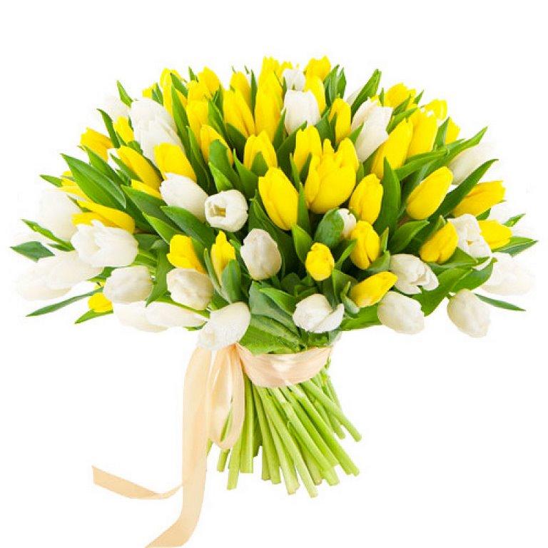 101 бело-желтый тюльпан