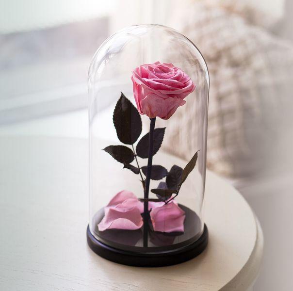 Розовая роза в колбе