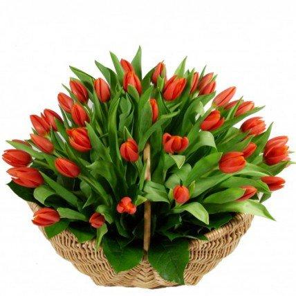 51 красный тюльпан в корзине