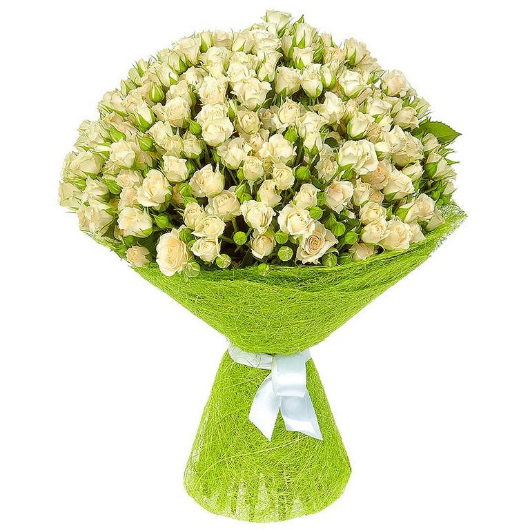 31 белая кустовая роза