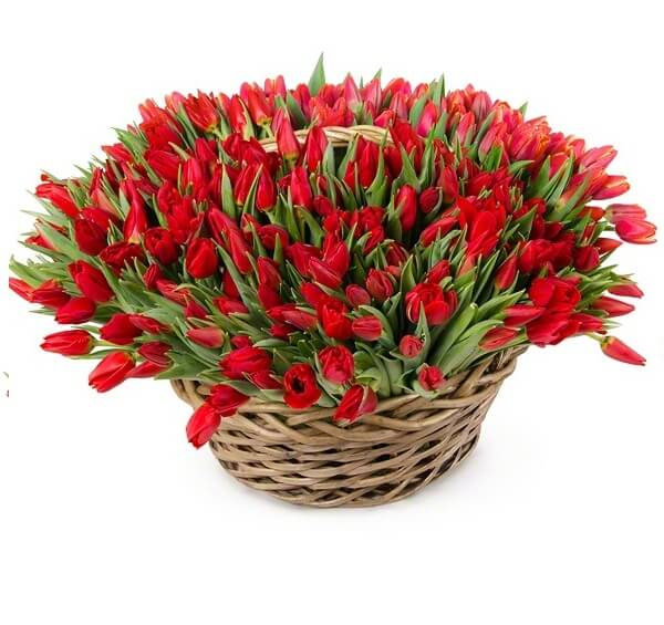 251 красный тюльпан в корзинке