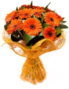 Букет из 15 оранжевых гербер