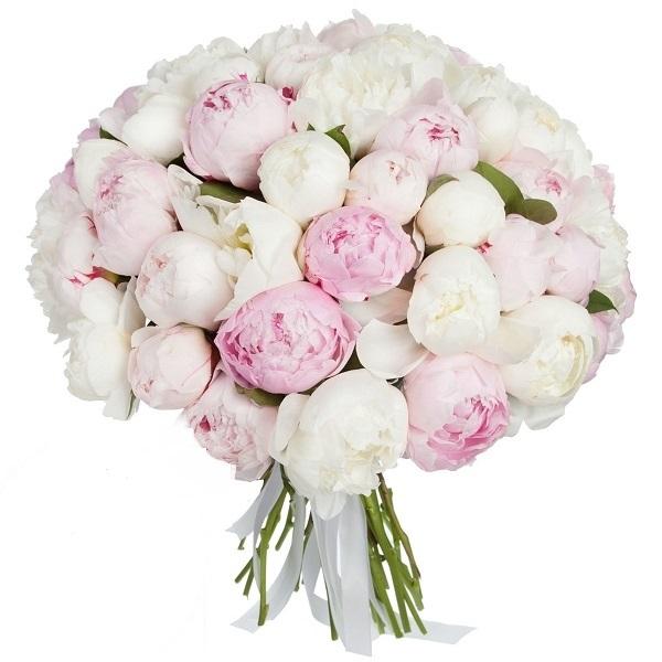 51 розовый и белый пион