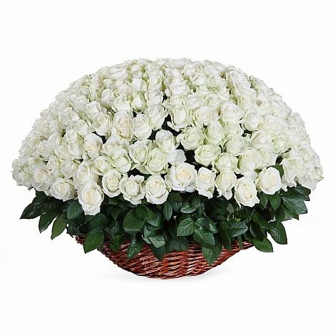 251 белая роза в корзине