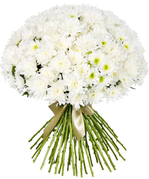 Букет из 55 белых хризантем