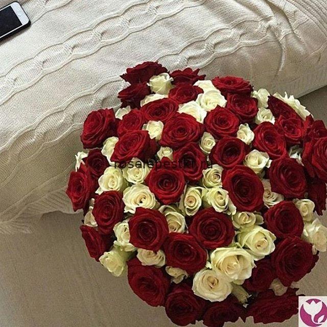 Красно-белые лепестки роз