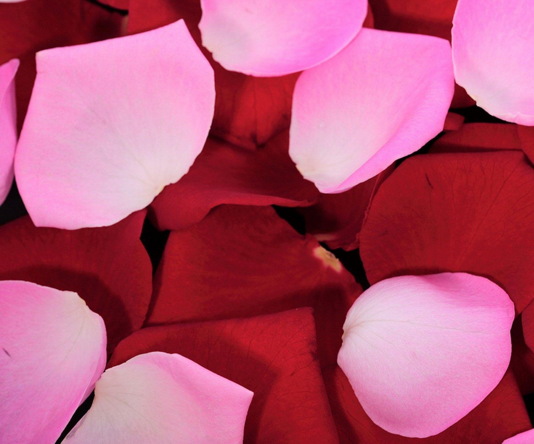 Как сделать розовые лепестки 996